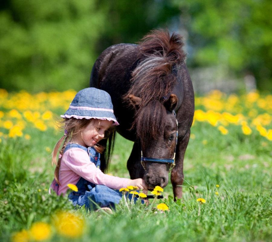 Baby poney au centre équestre de Digne les Bains