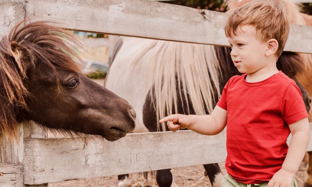 Baby poney : Emotions et sensations dès le plus jeune âge
