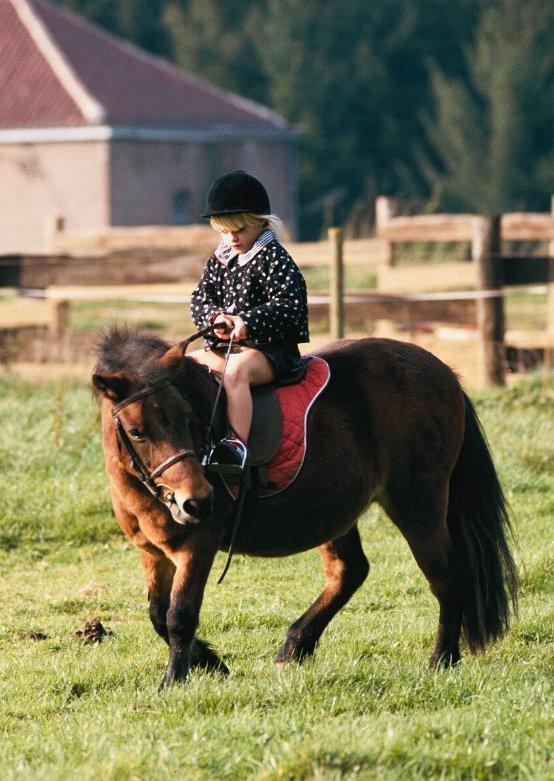 Cours de baby poney : Des séances courtes, axées sur le jeu