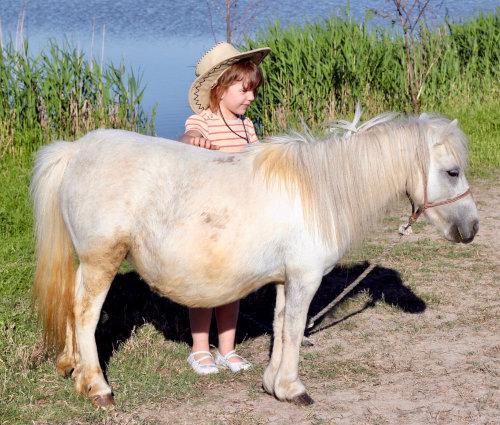 Cours de baby poney
