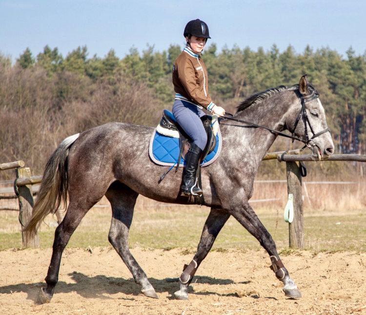 Cours d'équitation adulte à Digne les Bains