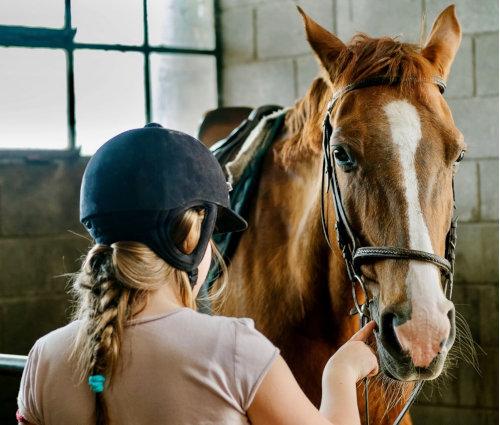 Handi équitation