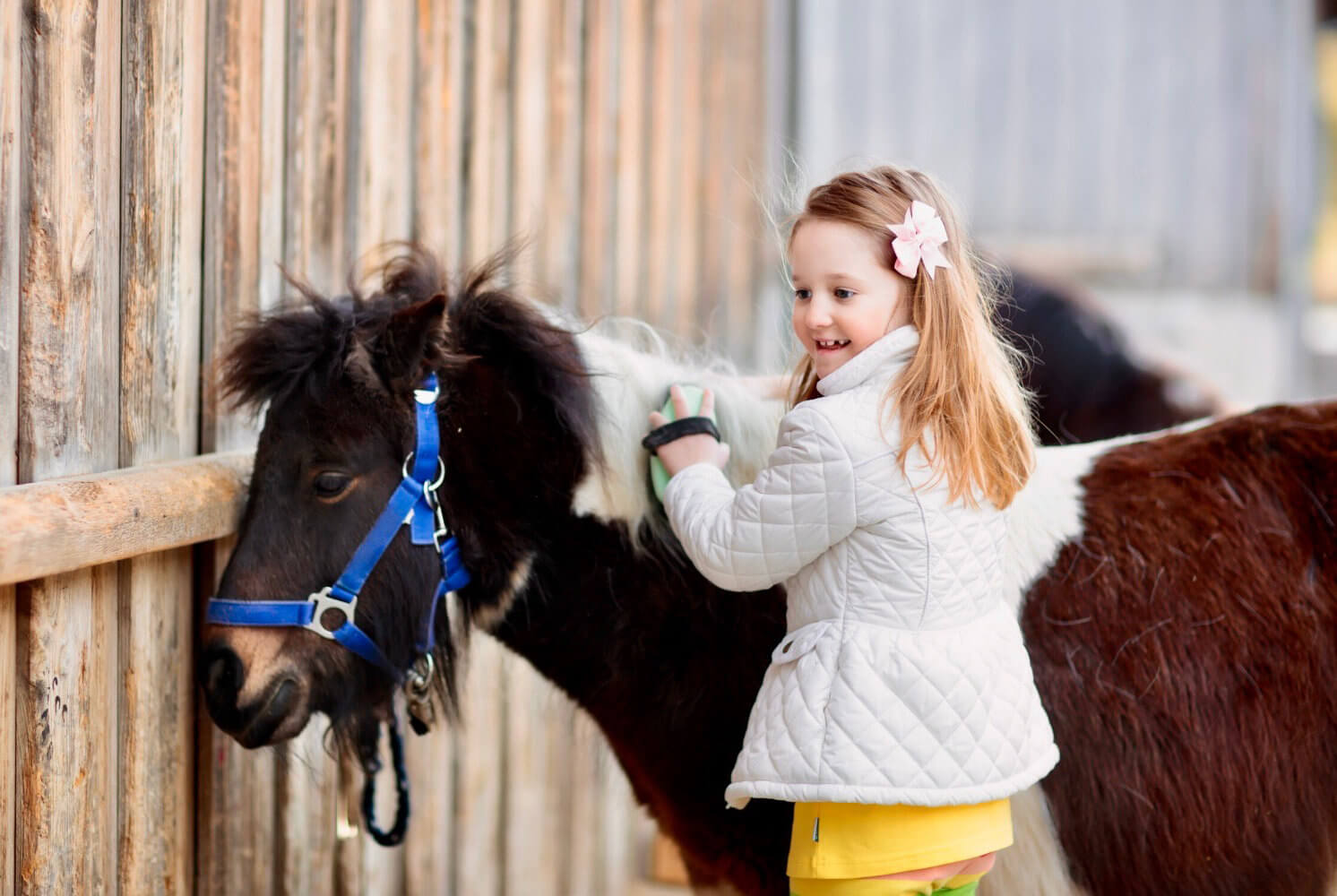 Stage de poney : accueil et préparation