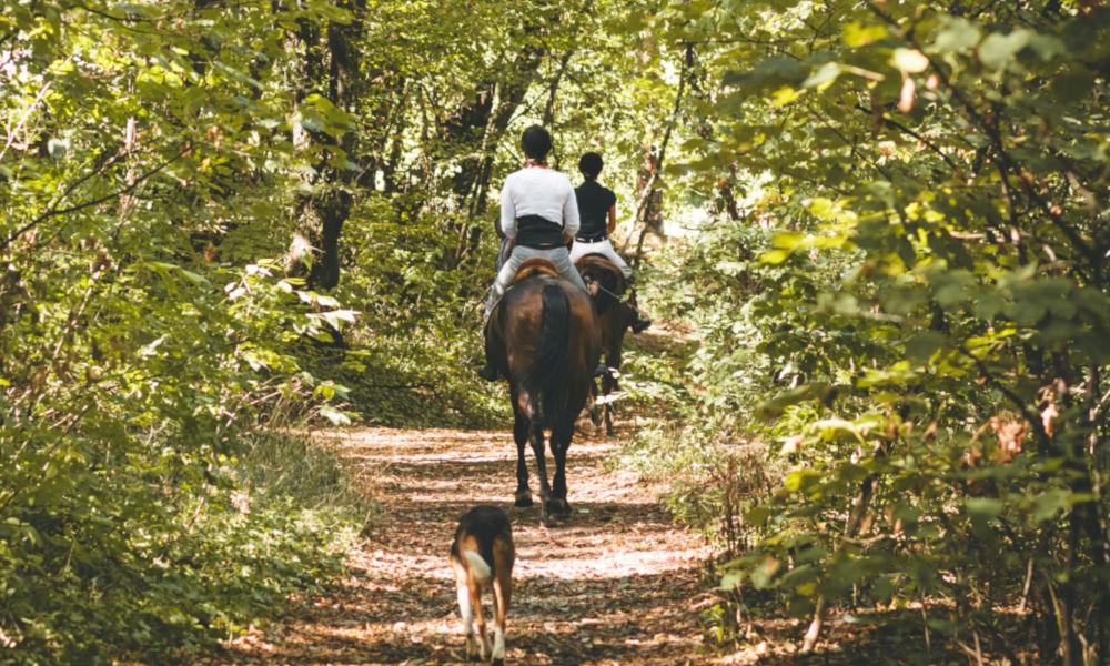 Stage d'équitation : galop de pleine nature